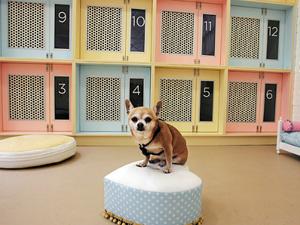 犬用ホテルルームです
